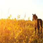 Foal standing in a field one