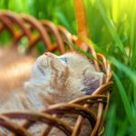 Little cute kitten sitting in a basket on the grass